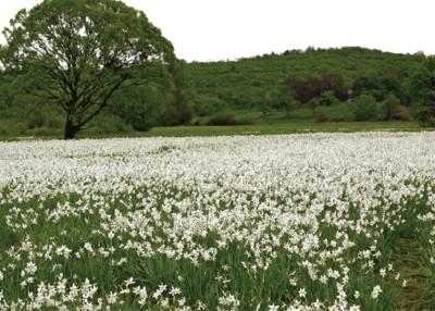 В долину самозакоханих квітів